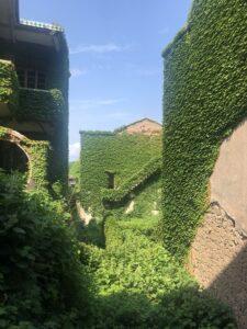 枸杞島・緑に飲み込まれる村・トトロの世界観